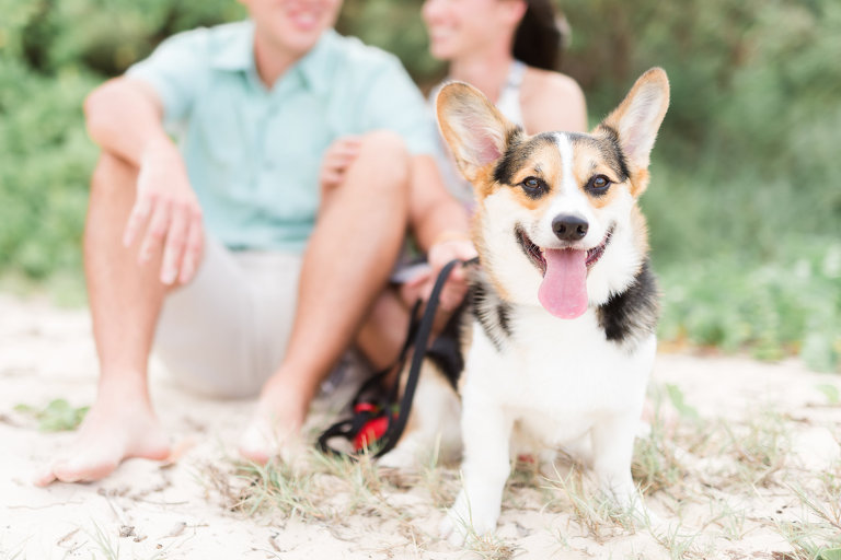 Fine Art Oahu Photographer for Couples | Dog on beach with couple in the background